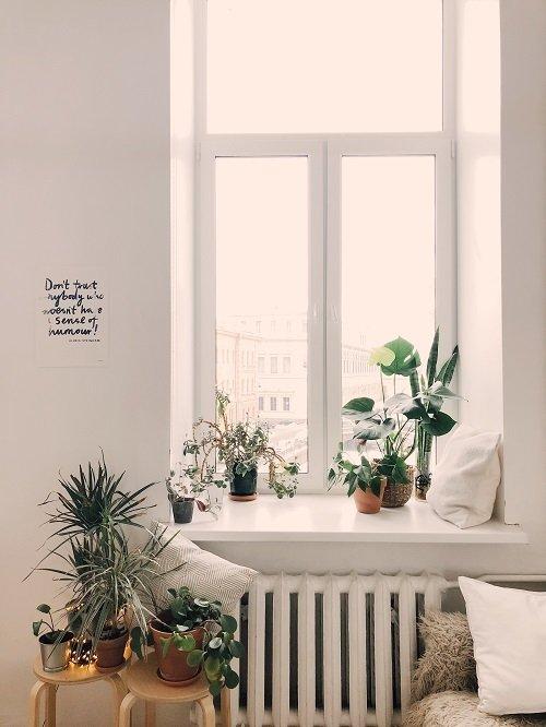 Best Light For Growing Plants Indoors, What You Need To Know About: Best Light  For Growing Indoors Plants (indoor garden Guide),